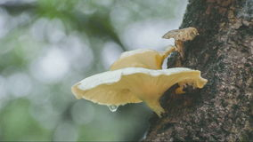 Rain falling on fungus and tree branch stock video