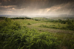 Rain falling over green ferns in summer Stock Photography