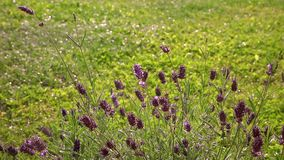 The rain falls on the green grass. Plants in the front stock video footage