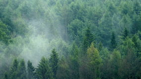 Rain Falls On Misty Forest Landscape. Heavy rain in the forest with mist moving over stock video