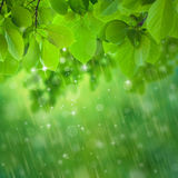 Rain falls Stock Photography