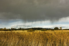 Rain in the field. Agricultural field with wheat crop under a dramatic sky just before a thunderstorm Stock Photos