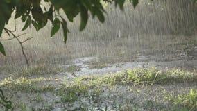 Rain In The Field stock footage