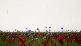Rain on field of flowers stock video footage