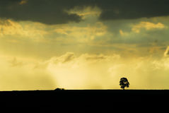 Rain in the field with sunset. Rain in the field with tree and sunset stock photography