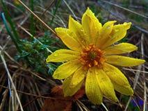 Rain flower.  Stock Image