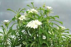 Rain of flowers. Nature ornamental plants  ornamental  beautiful wood rain of flowers Stock Photography
