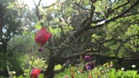 Rain flowers tree garden. Rain water drops fall on sun illuminated colorful tulip flower blooms grow under decorative tree in garden stock footage
