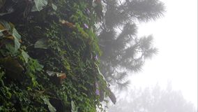 Rain, Fog, Mist Over Tree and Vegetation Background or Title Video. Ideal as a video where text, such as a title, can be superimposed on the right side; it shows stock footage
