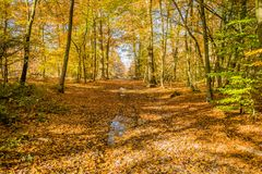 After the rain in Fontainebleau forest. In autumn Stock Photography