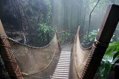 Rain forest. In the mist royalty free stock image