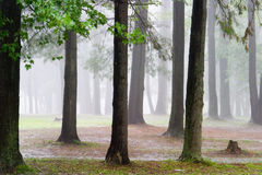 Rain in the forest. A sudden thunder shower drenches Glengarry park stock images