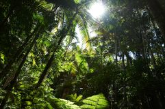 Rain forest stock image