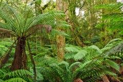 Rain forest. Wild nature: rain forest, Victoria, Australia Stock Photo