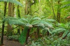 Rain forest. Wild nature: rain forest, Victoria, Australia Royalty Free Stock Image