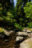 Rain forest. In Washington State Royalty Free Stock Photo