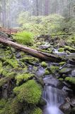Rain forest. At Olympic National Park Royalty Free Stock Photos