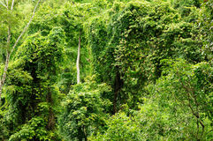 Rain forest Royalty Free Stock Photos