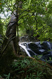 Rain forest. A view of tropical rain forest with waterfall Royalty Free Stock Photo