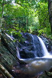 Rain forest. A view of tropical rain forest with waterfall Royalty Free Stock Images
