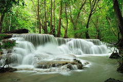 Rain forest. The waterfall in rain forest royalty free stock images