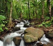 Rain forest. The waterfall in rain forest royalty free stock photo
