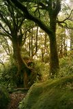 Rain forest Stock Images