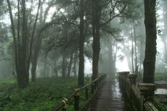Rain forest. A walking of Doi Intanond National Park Chiang mai Thailand Stock Photos