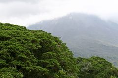 Rain forest. Trees and mountains of the rain forest in Costa Rica Royalty Free Stock Images