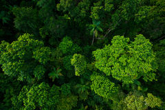 Rain forest from air near Kuranda, Queensland, Australia Royalty Free Stock Photos