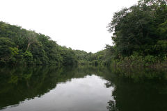 Rain forest amazon river Stock Photos
