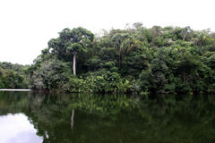 Rain forest amazon river royalty free stock photo