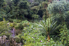 A rain forest in Amazonas. Colombia royalty free stock images