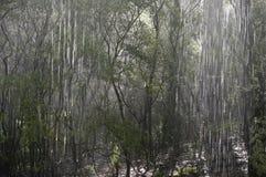 Rain forest,  Australia. Royalty Free Stock Photos