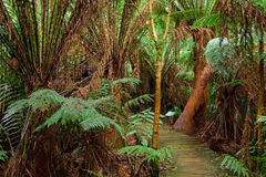 Rain forest, Australia Stock Images