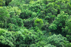 Rain forest background Stock Photography