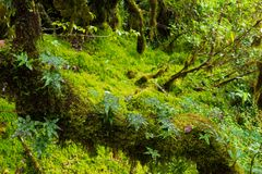 Rain forest background with green mosses and fern Royalty Free Stock Images