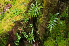 Rain forest background with green mosses and fern Royalty Free Stock Image