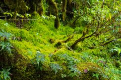 Rain forest background with green mosses and fern Stock Photo