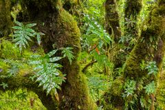 Rain forest background with green mosses and fern Royalty Free Stock Photos