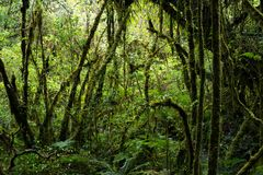 Rain forest background with green mosses and fern Stock Images