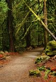 Rain Forest Barefoot Path. A barefoot path of soft woody earth lead into the rain forest Royalty Free Stock Photo
