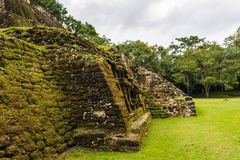 Rain forest in Belize. Belize is graced with more than 180 miles of coast, thick rain forest, and Maya ruins; and beneath its Caribbean waters lies one of the Royalty Free Stock Image