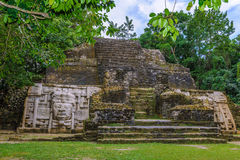 Rain forest in Belize. Maya temple in the rain forest Stock Image