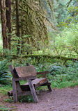 Rain Forest Bench Stock Photos