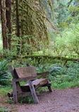 Rain Forest Bench Stock Photos