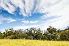Rain forest and Blue sky. In National park, Thailand Stock Photos