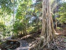 Free Rain Forest Boardwalk, Christmas Island, Australia Stock Photography - 68624372