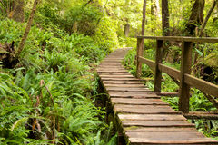 Rain Forest Boardwalk 1 royalty free stock image