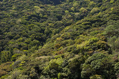 Green Rain Forest  Royalty Free Stock Photos